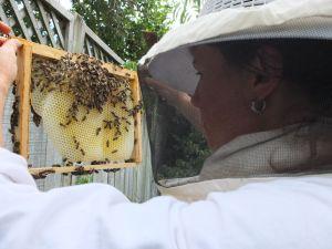 BeekeeperI