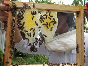 BeekeeperII