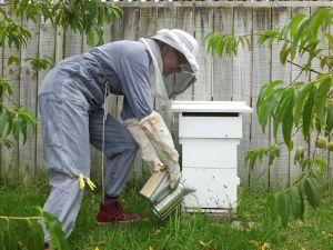 BeekeeperIII