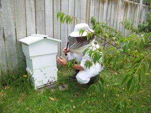 BeekeeperV