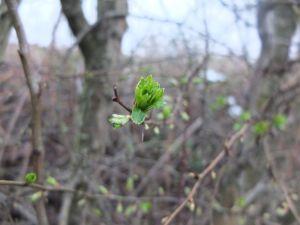 FrühlingI